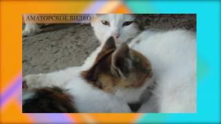как кошка кормит своих котят а пес пытался пристроиться на халяву