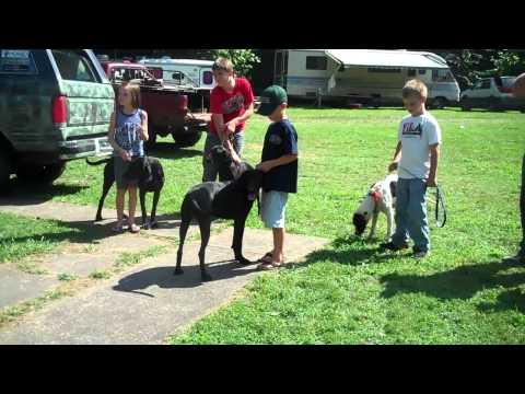 2010 National Plott Hound Days Holmesville, Ohio