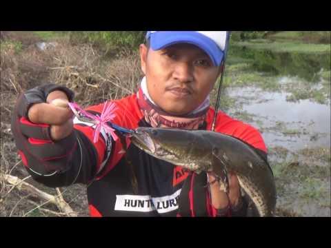 JN4 DIZZ ตกปลาช่อนน้ำท่วมข้างทาง จ.สงขลา