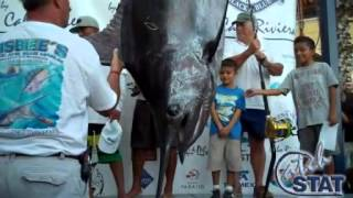 2013 Bisbee's Black & Blue Marlin Tournament | Retriever | Blue Marlin