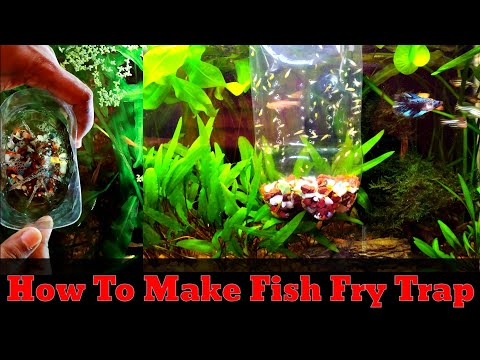 How To Make Fry Trap For Your Aquarium | DIY Fish Fry Trap