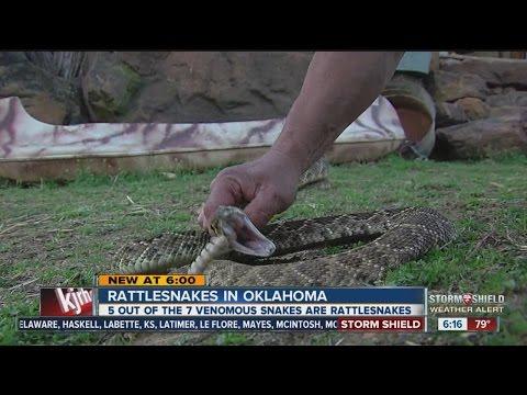 Rattlesnakes In Oklahoma