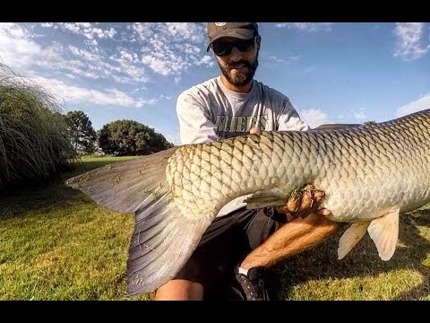 Fishing For GIANT GRASS CARP With DOG FOOD As BAIT!