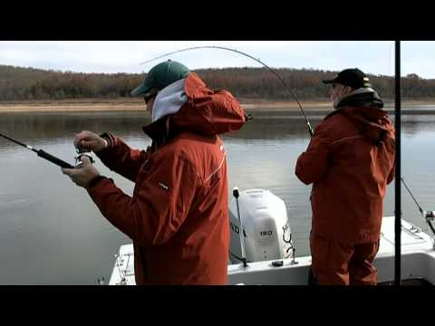 Striper Fishing On Lake Norfork In Northern Arkansas With Wired2Fish
