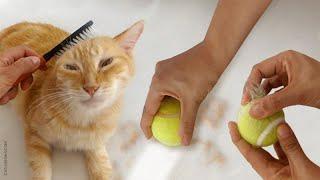 15 Ways to Remove Cat Hair Around the House