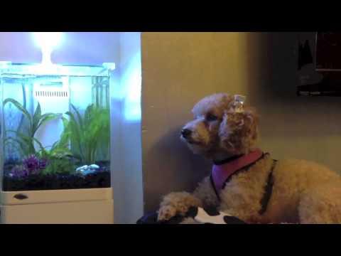 Aquatop zen nano aquarium fish tank nikki knows pets for Zen fish tank