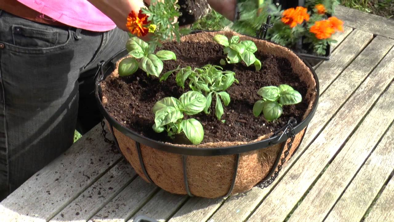 How To: Grow Tomatoes In Hanging Baskets