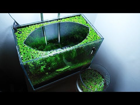 16th Month - (Luck of the Fry) NO filter, NO CO2, NO Ferts 5 Gallon Nano Tank