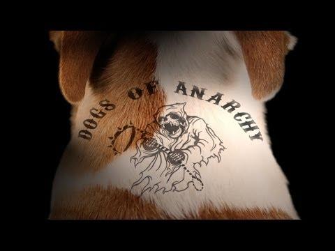 Sons of Anarchy (Dog Parody)