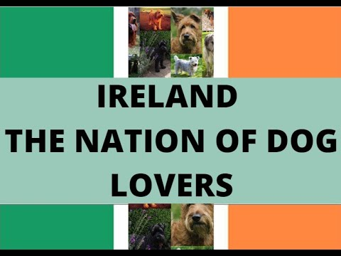 Ireland - The Nation of Dog lovers