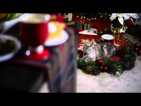 Grumpy Cat Stars in 'Hard To Be a Cat at Christmas' Music Video