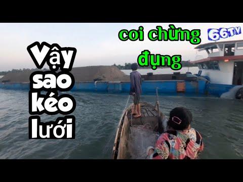 Đang Kéo Lưới Mà Gặp Cảnh Này Đây #66TV #bắtcásôngtiền #mekongriverfish