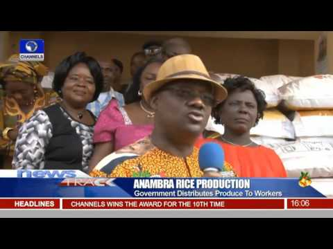 Anambra State Begins Harvest Of Rice Produce 27/12/15