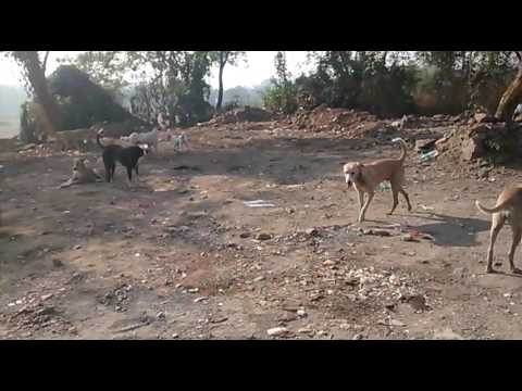 Slum dog slum world in India