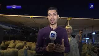 اقبال ضعيف على بيع الأضاحي في المملكة - (23-8-2018)