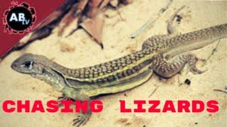 Chasing Lizards! Corey Wild - Ep.14 : AnimalBytesTV