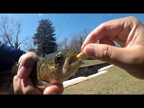 The Secret of the Trout Magnet Exposed?! Ft. Juan T. (Yardley, PA)