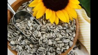 Семена подсолничника