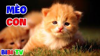 MÈO CON DỄ THƯƠNG 🎵 Nhạc Thiếu Nнi Sôi Động Cho Bé 🎶 Chú Mèo Con, Bống Bống Bang Bang