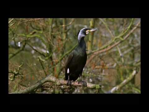 The Cormorants (1 of 4)