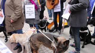 Ledarhundsmarschen Riksdagen - Rosenbad 2015