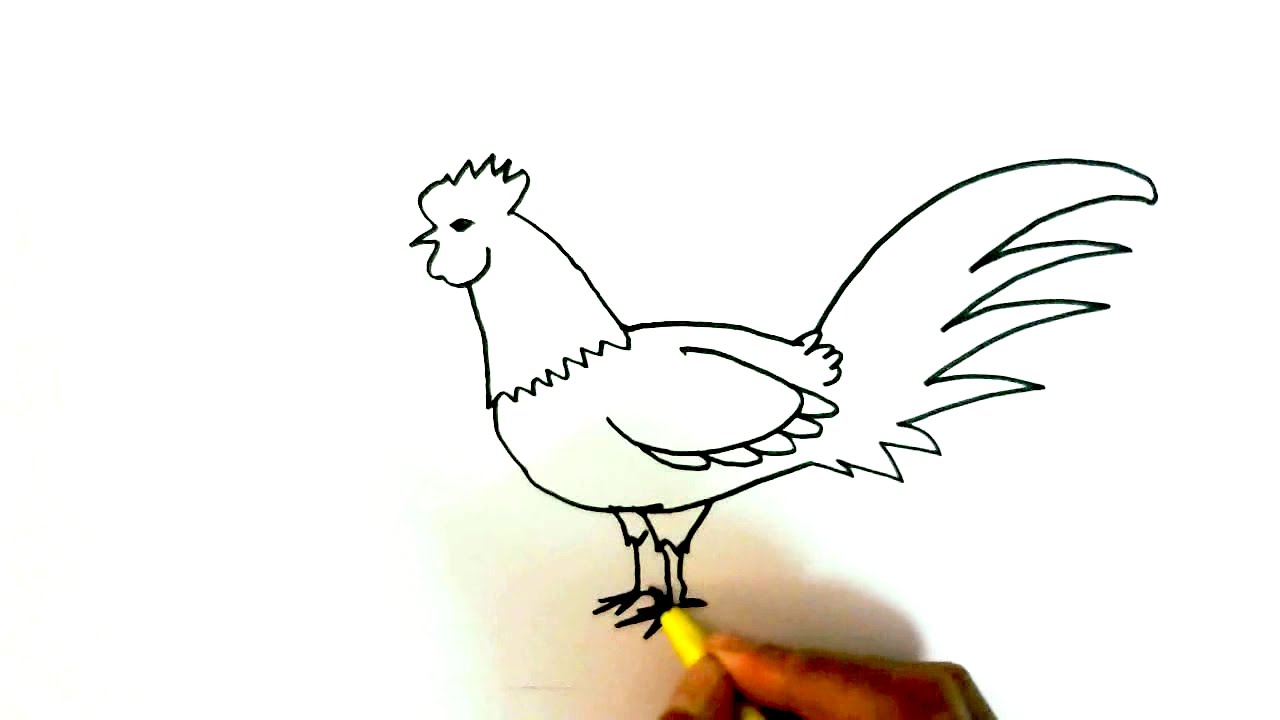 how to draw a rooster or chicken in easy steps for children kids beginners
