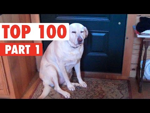 Top 100 Best of The Year 2016 Part 1