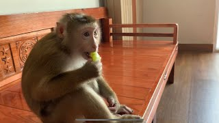 Monkey Baby Nui Nui enjoy delicious fruits and good movies