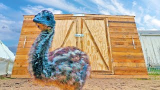 the Emu Fortress