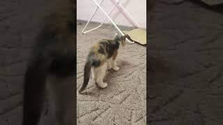 Моя кошка Беременна?/Признаки беременности