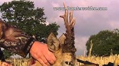 Kapitale Rehböcke - Hunters Video
