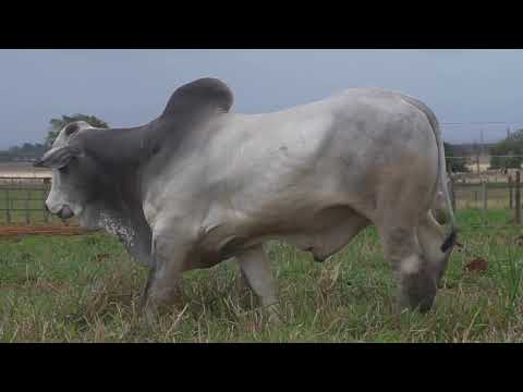 LOTE 060   GPO A 2934