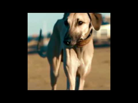 Race The Wind ▶ WHAT A GREYHOUND REALLY LOVES... Facebook Social Media