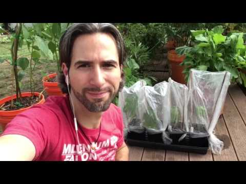 How to Clone Your Own Organic Fig Trees From Your Local Organic Farm  Part 2 The Fig Mistake!
