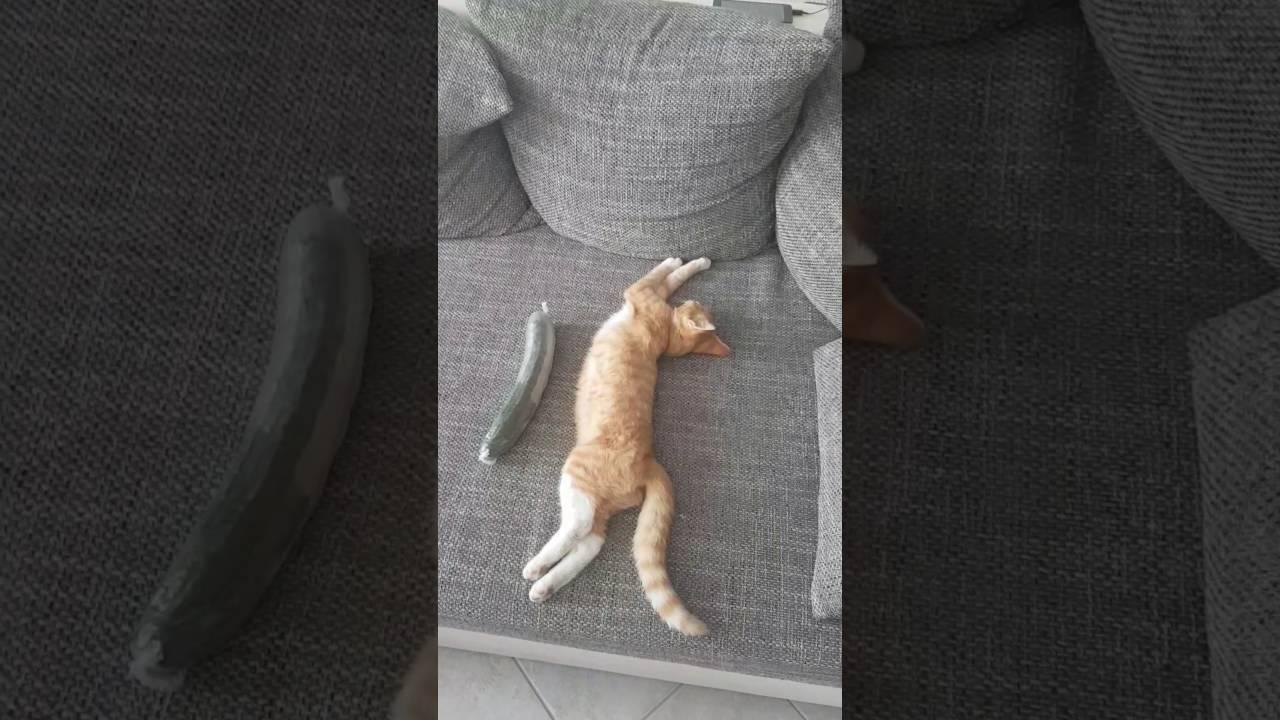 Katzenvideos Miauen Gurke Backe Backe Kuchen Katze Schlaft Mit Und