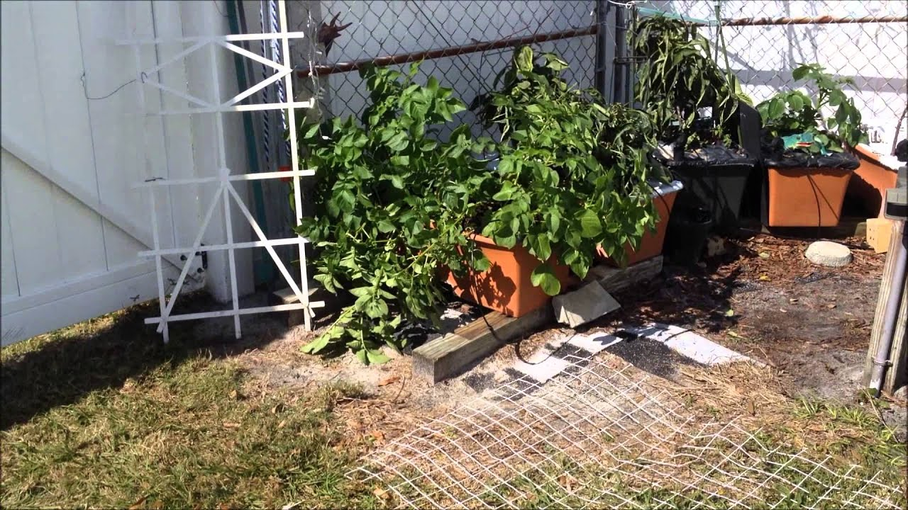 growing red potatoes in earthbox fixing up the bed part 1 youtube