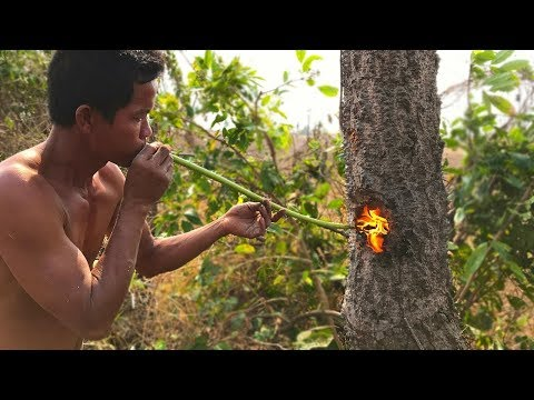 Primitive Technology: Nature Cut Tree Using Fish Oil and Tree Resin in forest