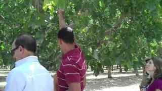Wonderful Pistachios - Harvest Tour 2010 Pistachio Education - Perfect to Eat.MP4