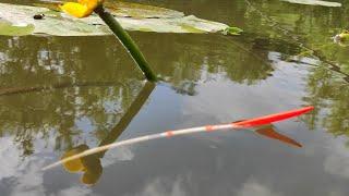 Рыбалка на ПОПЛАВОК - ВЕДРО ЗА ЧАС на утренней зорьке Караси плотва окунь язь