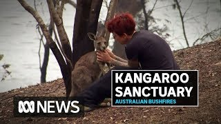 Kangaroo sanctuary destroyed by bushfires as locals count cost to native wildlife | ABC News