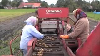 Kartoffelernte(Dieses Video zeigt, wie die Schlepperfreunde Flachsmeer Kartoffeln ernten. Wie zu Oma´s Zeiten, zwar schon mit einem Vollernter der Fa. Grimme, aber ..., 2012-05-20T11:23:52.000Z)