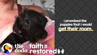 Woman Is Determined To Reunite Stray Dog With Her Puppies | The Dodo Faith = Restored