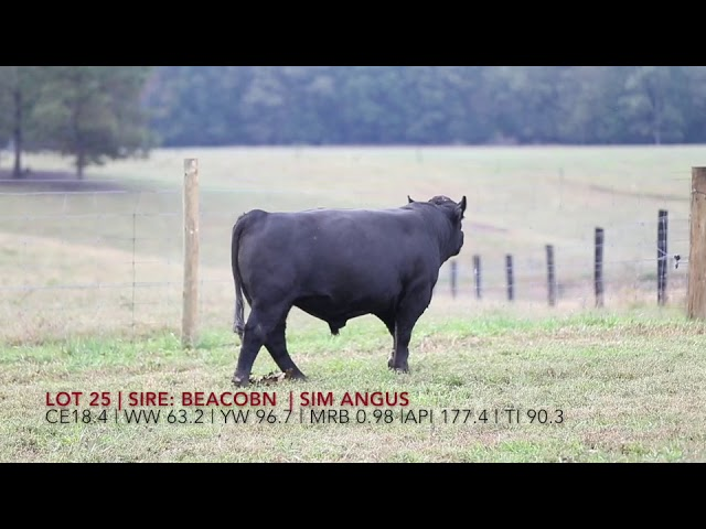 Edgewood Angus Lot 25