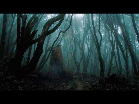 El bosque encantado de Hoia Baciu (Rumanía)