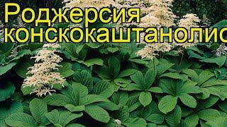 Роджерсия конскокаштанолистная. Краткий обзор, описание характеристик rodgersia aesculifolia