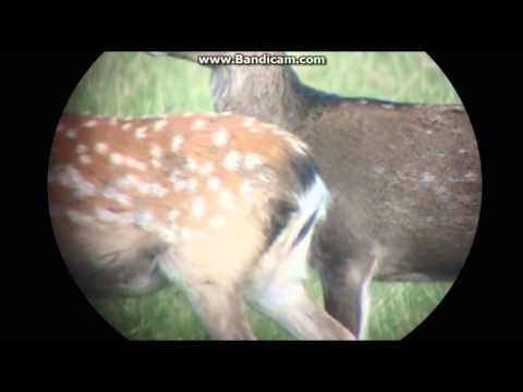 Deer Vs .30-06