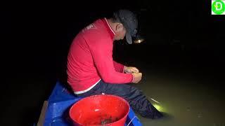 Thấy cá ục nhiều đem câu ra giăng dính toàn cá trê l Fishing