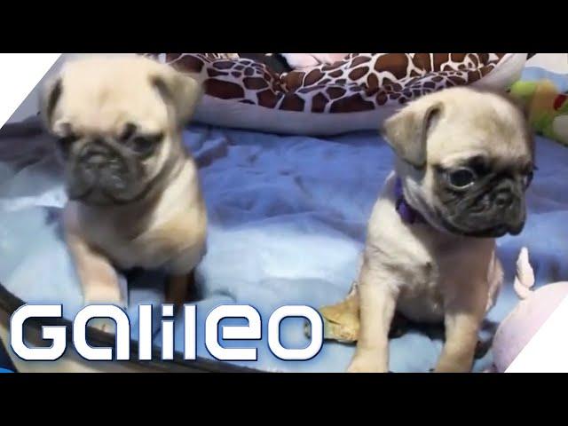 5 Hunde-Geheimnisse | Galileo | ProSieben