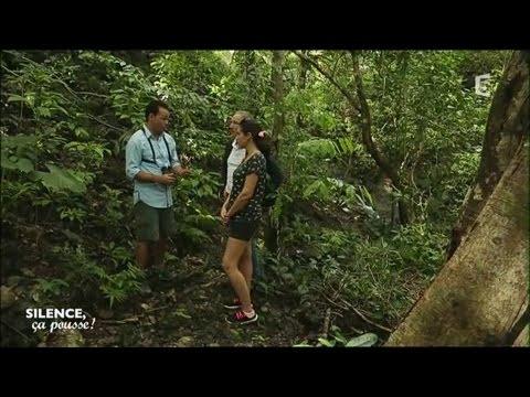 Visite de jardin - Station Biologique La Selva - Silence ça pousse !