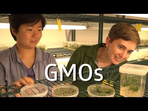 GMOs! (Science IRL S3 Ep6)